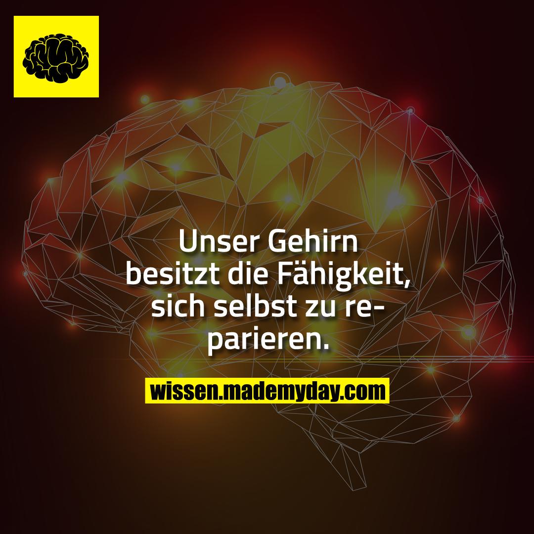 Unser Gehirn besitzt die Fähigkeit, sich selbst zu reparieren.