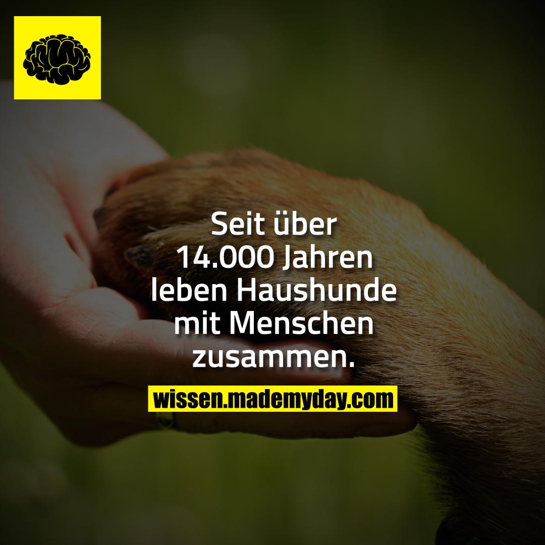 Seit über 14.000 Jahren leben Haushunde mit Menschen zusammen.