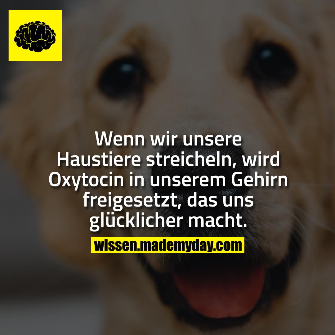 Wenn wir unsere Haustiere streicheln, wird Oxytocin in unserem Gehirn freigesetzt, das uns glücklicher macht.