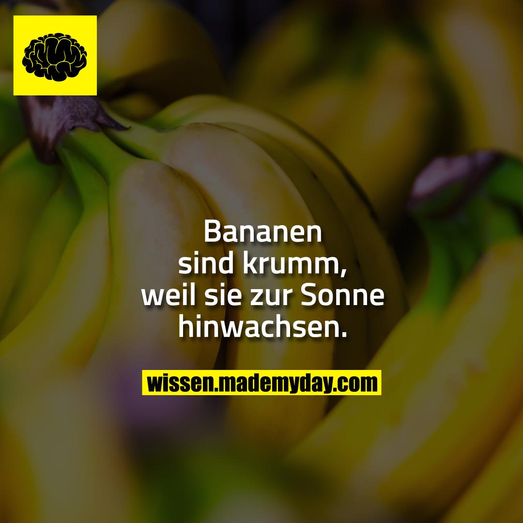 Witz die warum ist banane krumm Asoziale Witze: