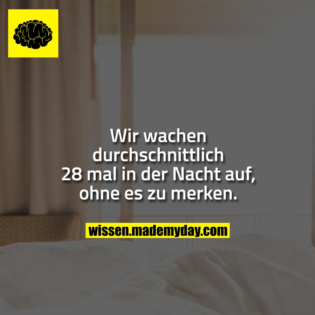 Wir wachen durchschnittlich 28 mal in der Nacht auf, ohne es zu merken.