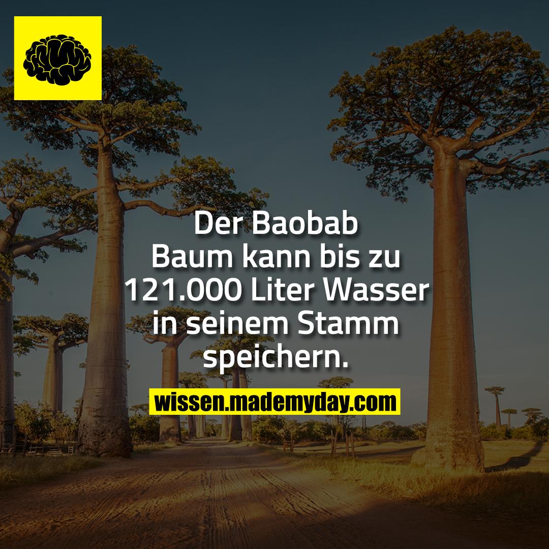 Der Baobab Baum kann bis zu 121.000 Liter Wasser in seinem Stamm speichern.