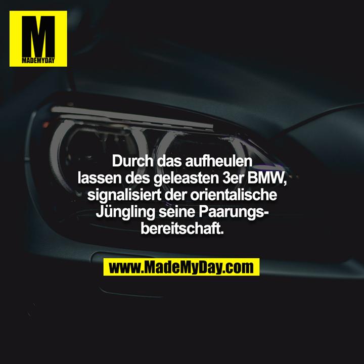 Durch das aufheulen lassen des geleasten 3er BMW, signalisiert der orientalische Jüngling seine Paarungsbereitschaft.