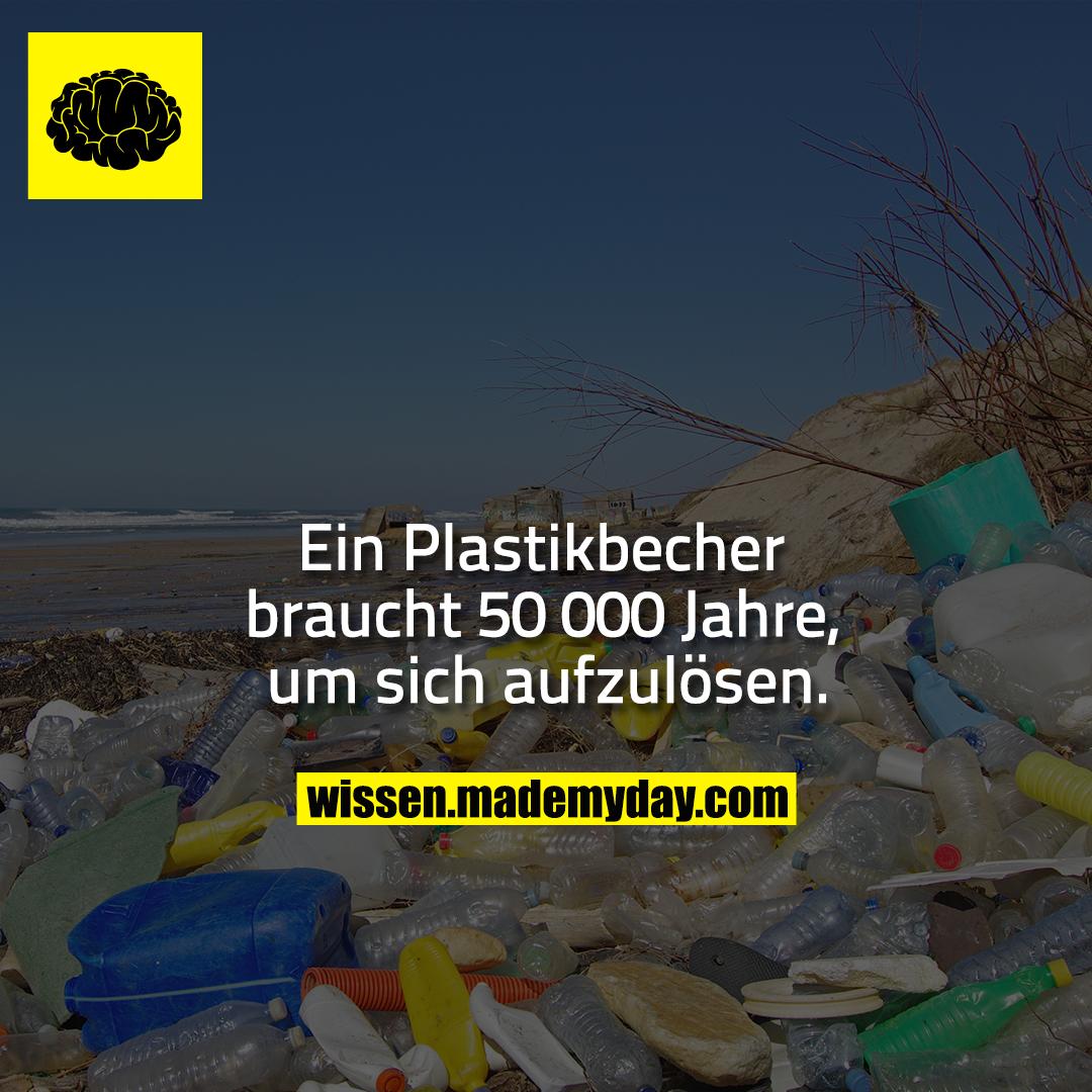 Ein Plastikbecher braucht 50 000 Jahre, um sich aufzulösen.