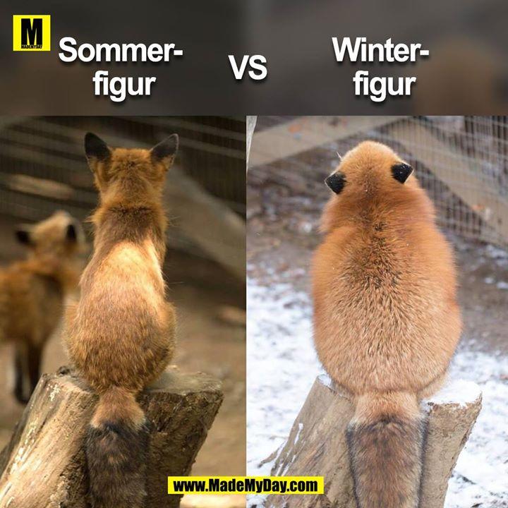 Sommer- <br /> figur<br /> <br /> vs. <br /> <br /> Winter-<br /> figur