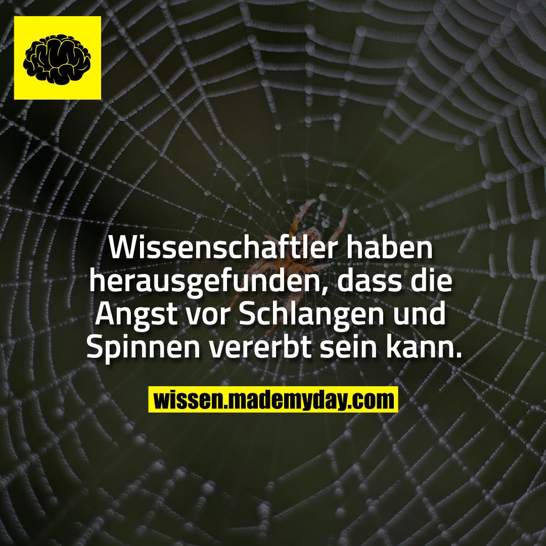 Wissenschaftler haben herausgefunden, dass die Angst vor Schlangen und Spinnen vererbt sein kann.