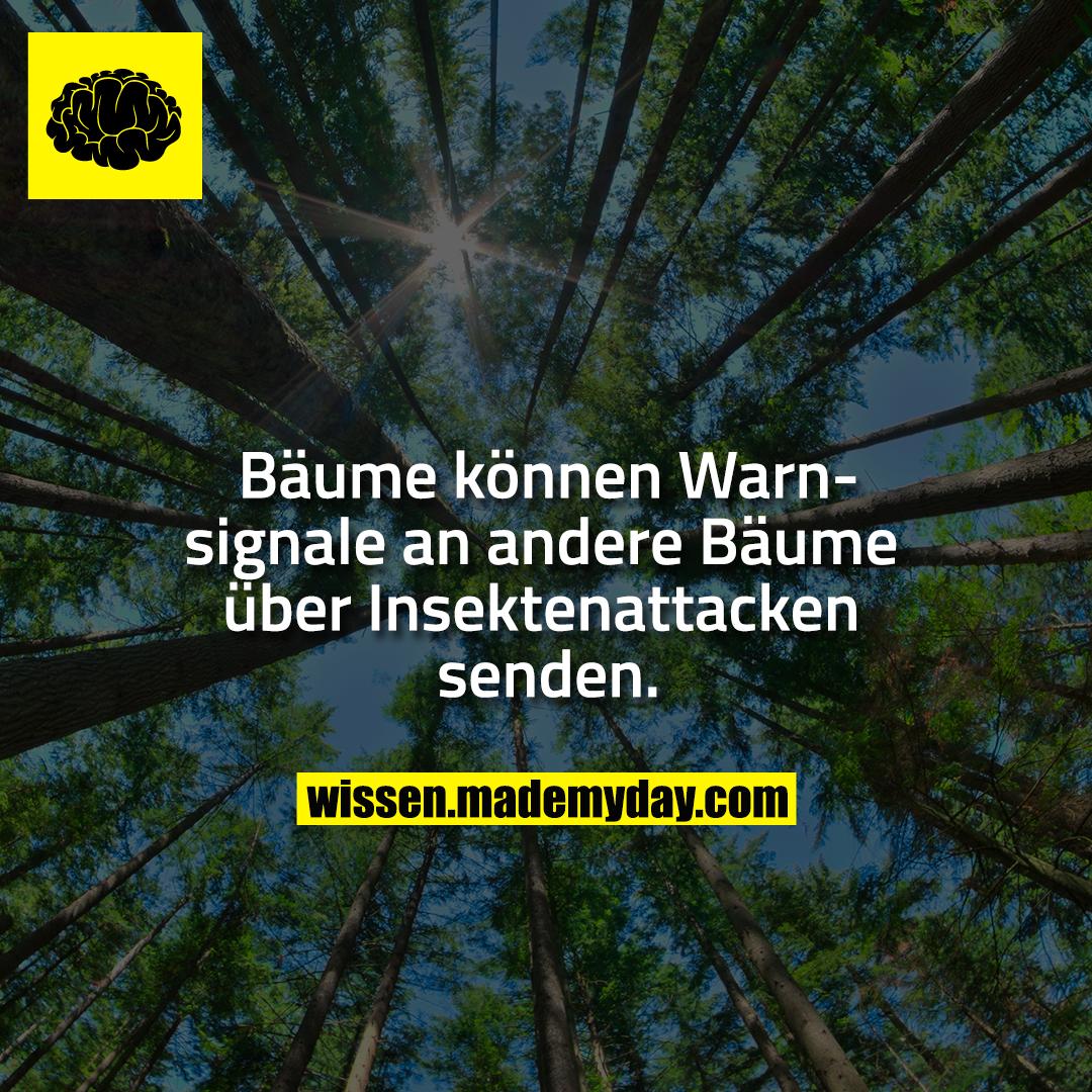 Bäume können Warnsignale an andere Bäume über Insektenattacken senden.