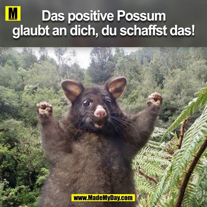 Das positive Possum<br /> glaubt an dich, du schaffst das!