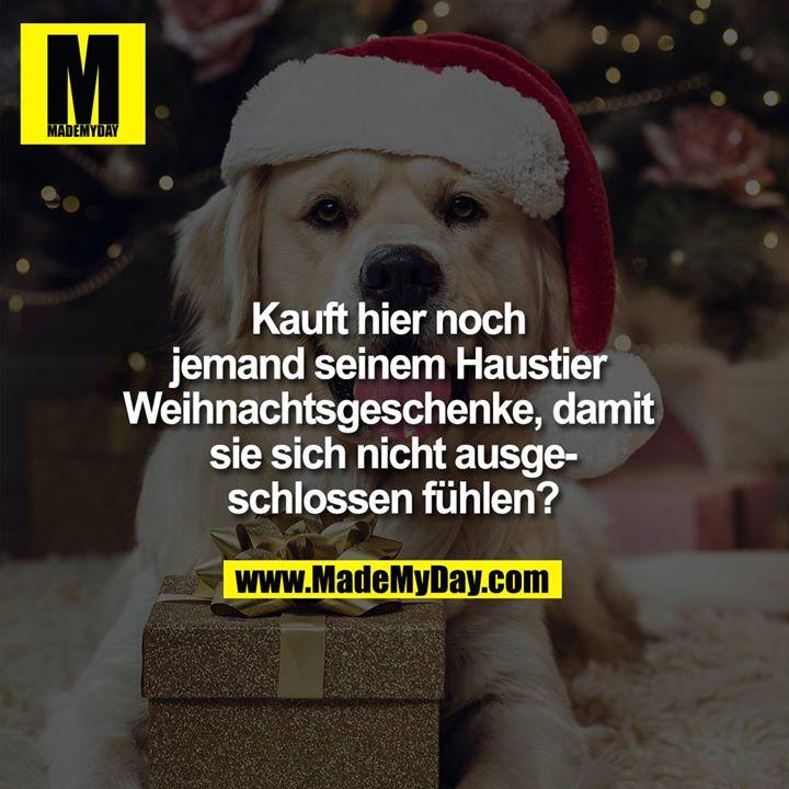 Kauft hier noch jemand seinem Haustier Weihnachtsgeschenke, damit sie sich nicht ausgeschlossen fühlen?