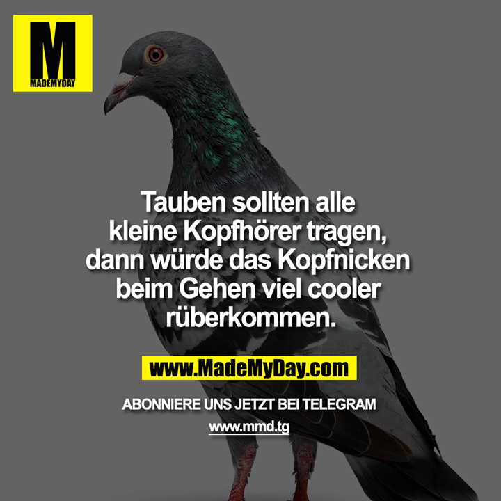 Tauben sollten alle kleine Kopfhörer tragen, dann würde das Kopfnicken beim Gehen viel cooler rüberkommen.