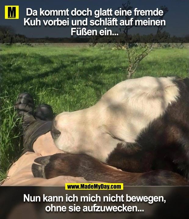 Da kommt doch glatt eine fremde<br /> Kuh vorbei und schläft auf meinen<br /> Füßen ein...<br /> Nun kann ich mich nicht bewegen,<br /> ohne sie aufzuwecken...