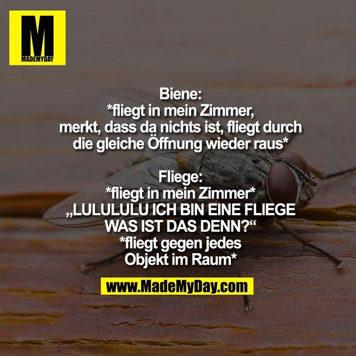 """Biene:<br /> *fliegt in mein Zimmer,<br /> merkt, dass da nichts ist, fliegt durch<br /> die gleiche Öffnung wieder raus*<br /> <br /> Fliege:<br /> *fliegt in mein Zimmer*<br /> """"LULULULU ICH BIN EINE FLIEGE<br /> WAS IST DAS DENN?""""<br /> *fliegt gegen jedes<br /> Objekt im Raum*"""