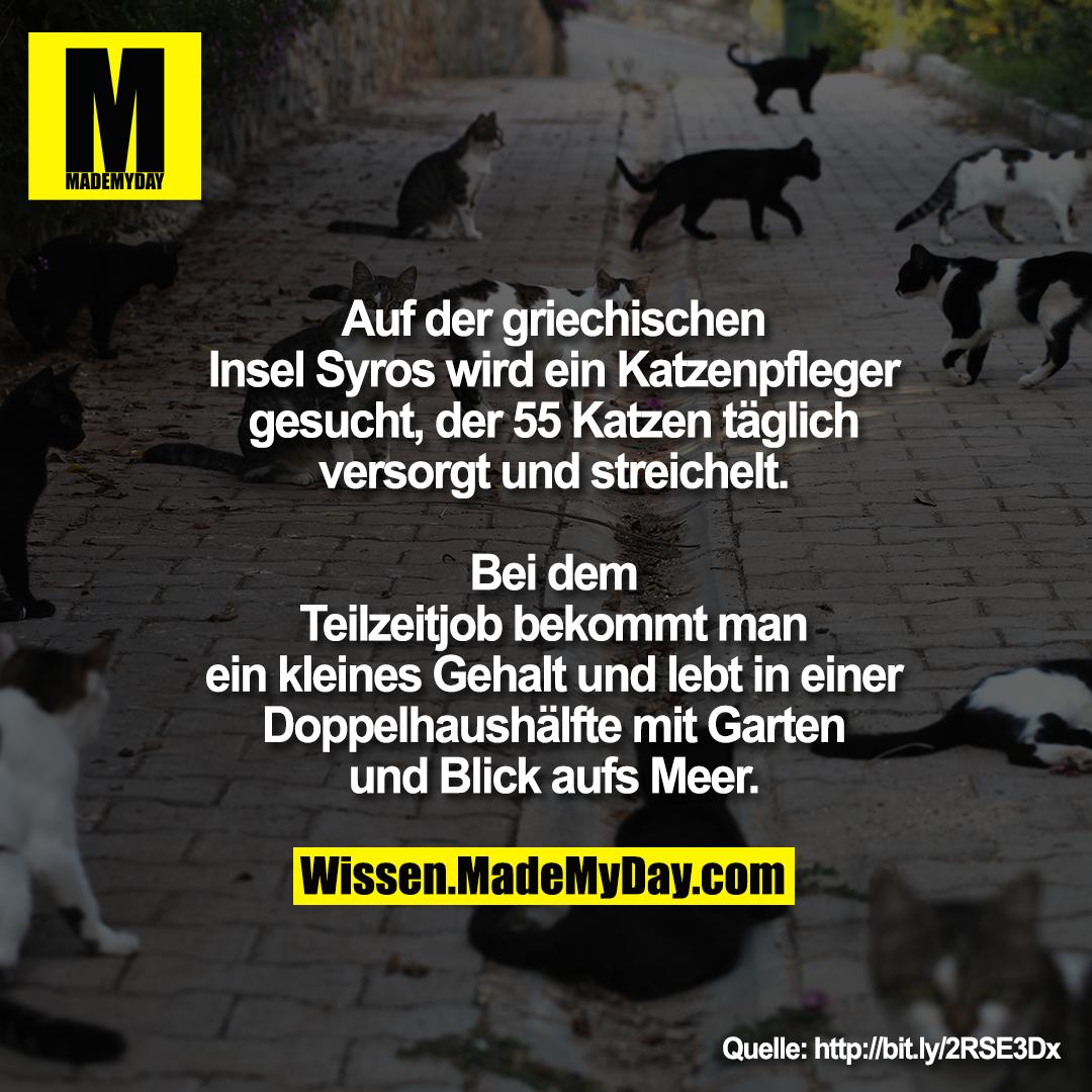Auf der griechischen Insel Syros wird ein Katzenpfleger gesucht, der 55 Katzen täglich versorgt und streichelt.<br /> Bei dem Teilzeitjob bekommt man ein kleines Gehalt und lebt in einer Doppelhaushälfte mit Garten und Blick aufs Meer.