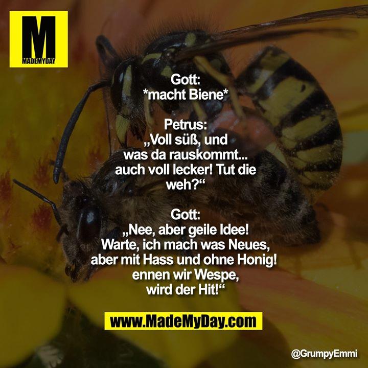 """Gott:<br /> *macht Biene*<br /> <br /> Petrus:<br /> """"Voll süß, und<br /> was da rauskommt...<br /> auch voll lecker! Tut die<br /> weh?""""<br /> <br /> Gott:<br /> """"Nee, aber geile Idee!<br /> Warte, ich mach was Neues,<br /> aber mit Hass und ohne Honig! <br /> ennen wir Wespe,<br /> wird der Hit!"""""""