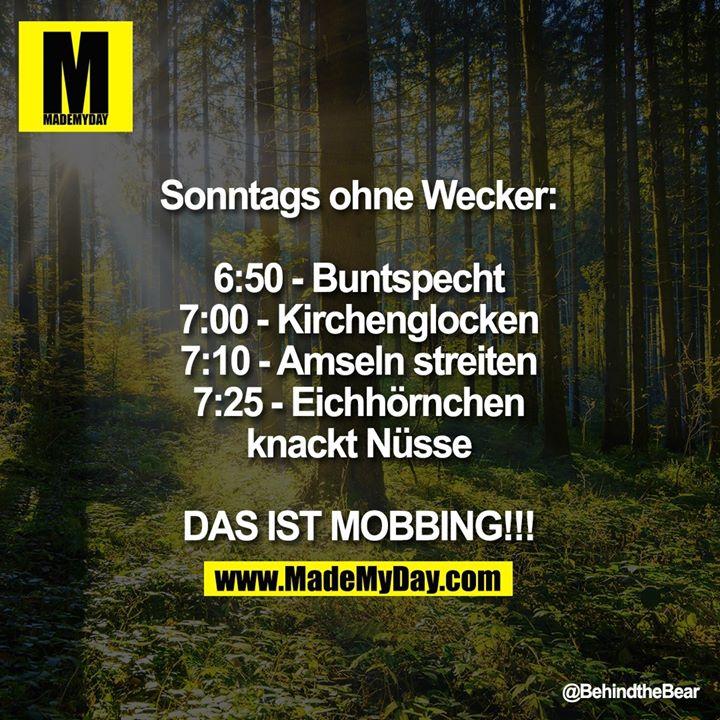 Sonntags ohne Wecker:<br /> 6:50 - Buntspecht<br /> 7:00 - Kirchenglocken<br /> 7:10 - Amseln streiten<br /> 7:25 - Eichhörnchen knackt Nüsse<br /> DAS IST MOBBING!!!