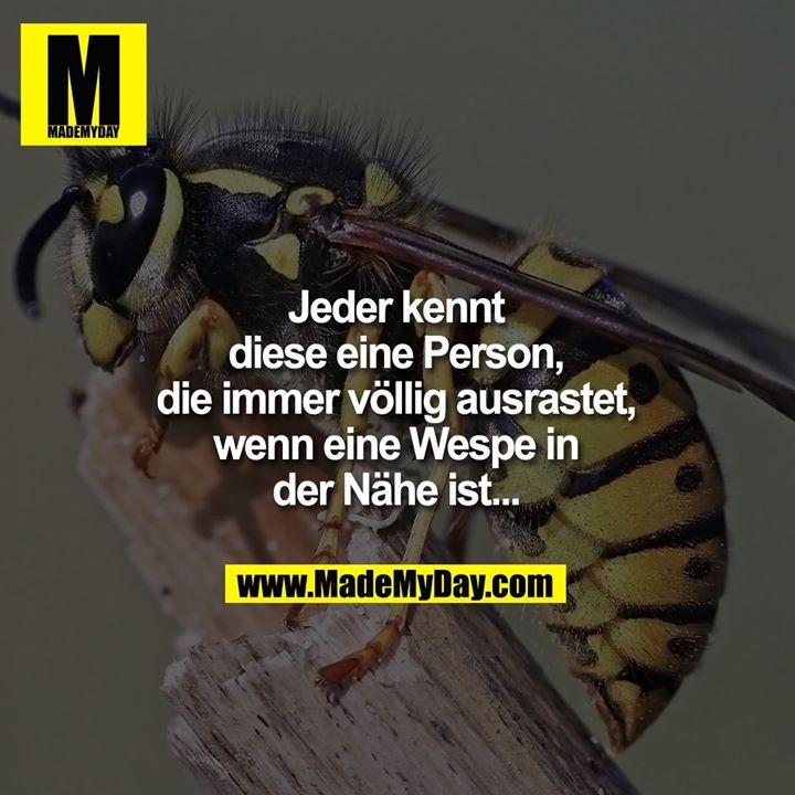 Jeder kennt diese eine Person, die immer völlig ausrastet, wenn eine Wespe in der Nähe ist...