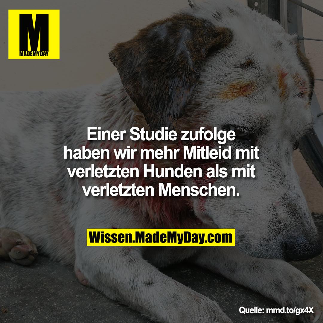 Einer Studie zufolge haben wir<br /> mehr Mitleid mit verletzten<br /> Hunden als mit verletzten<br /> Menschen.
