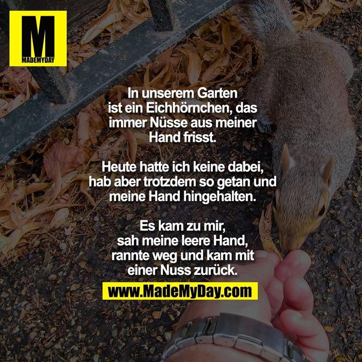 In unserem Garten<br /> ist ein Eichhörnchen, das<br /> immer Nüsse aus meiner<br /> Hand frisst.<br /> <br /> Heute hatte ich keine dabei,<br /> hab aber trotzdem so getan und<br /> meine Hand hingehalten.<br /> <br /> Es kam zu mir,<br /> sah meine leere Hand,<br /> rannte weg und kam mit<br /> einer Nuss zurück.