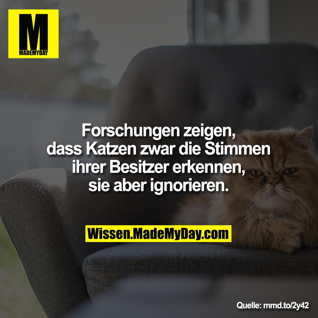 Forschungen zeigen, dass Katzen zwar<br /> die Stimmen ihrer Besitzer erkennen,<br /> sie aber ignorieren.