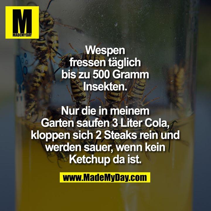 Wespen fressen täglich bis zu<br /> 500 Gramm Insekten.<br /> Nur die in meinem Garten<br /> saufen 3 Liter Cola, kloppen<br /> sich 2 Steaks rein und werden<br /> sauer, wenn kein Ketchup<br /> da ist.