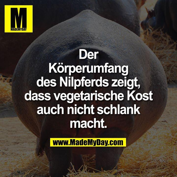 Der Körperumfang des Nilpferds zeigt, dass vegetarische Kost auch nicht schlank macht.
