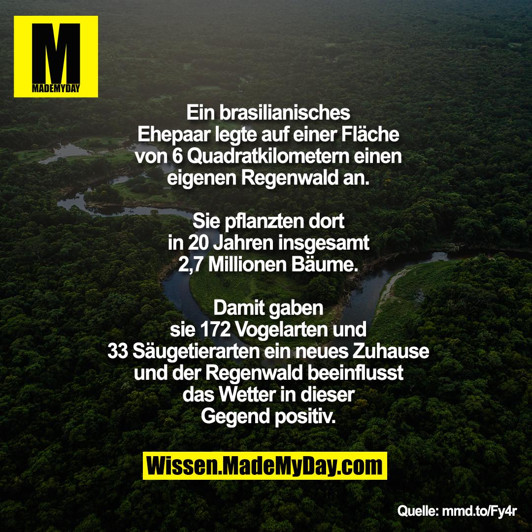 Ein brasilianisches Ehepaar legte auf einer Fläche von 6 Quadratkilometern einen eigenen Regenwald an. Sie pflanzten dort in 20 Jahren insgesamt 2,7 Millionen Bäume. Damit gaben sie 172 Vogelarten und 33 Säugetierarten ein neues Zuhause und der Regenwald beeinflusst das Wetter in dieser Gegend positiv.