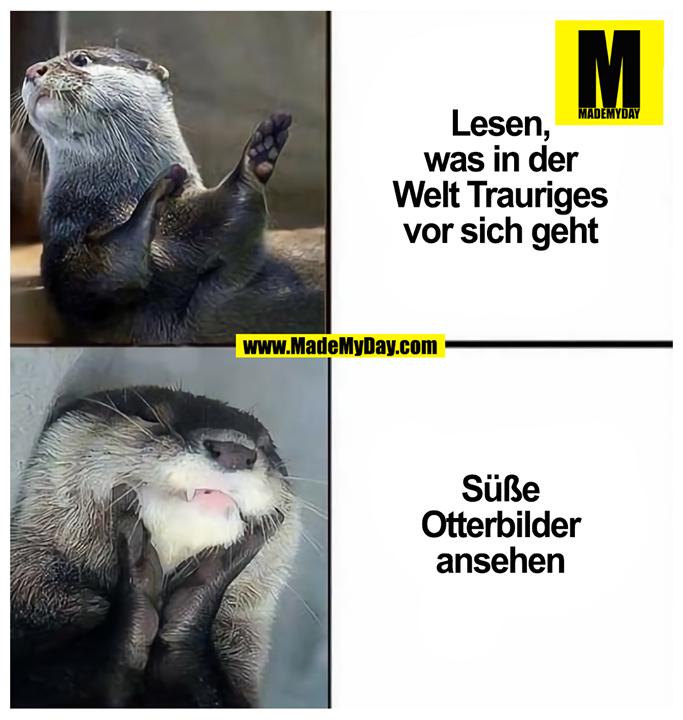 Lesen, was in der Welt Trauriges vor sich geht<br /> <br /> Süße Otterbilder ansehen