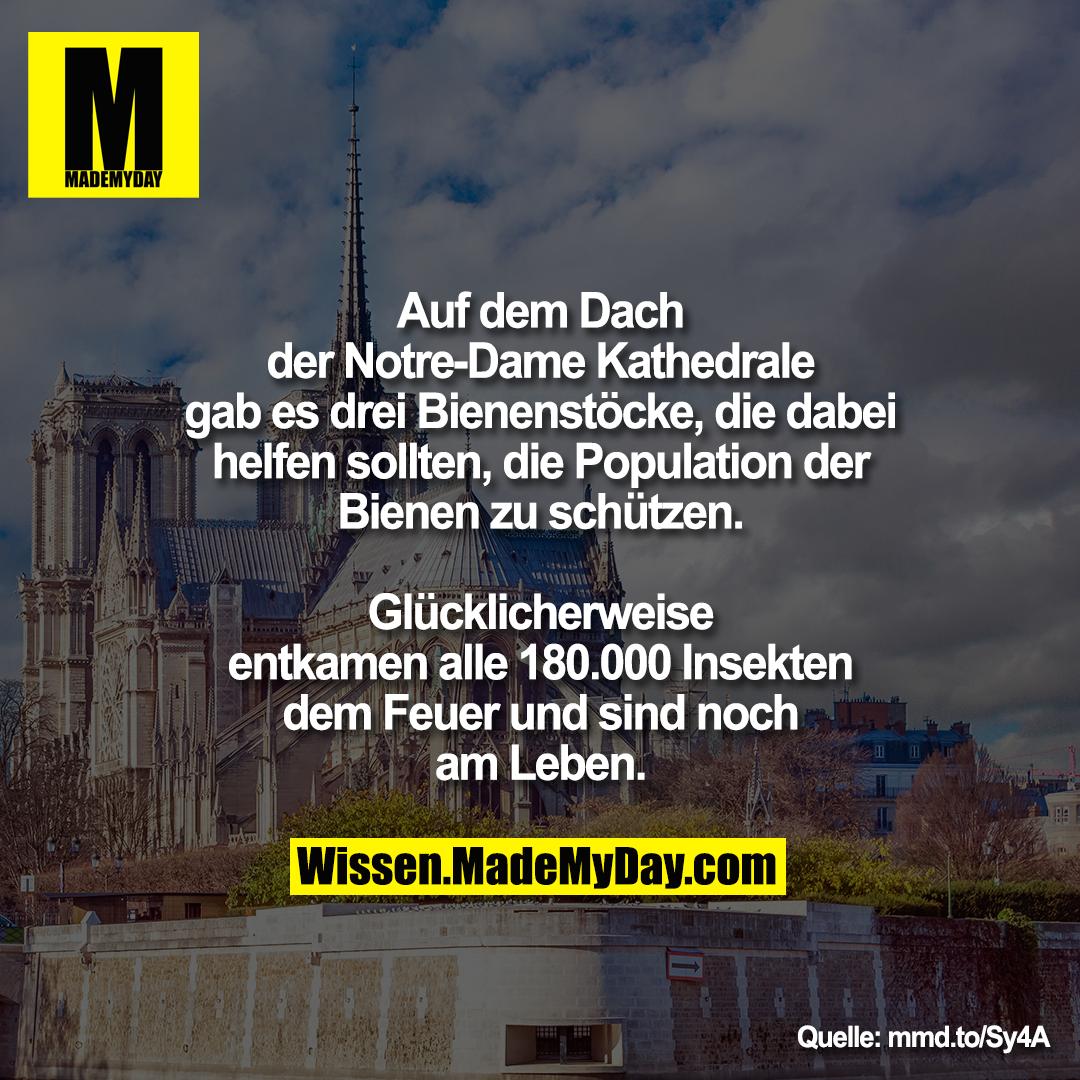 Auf dem Dach der Notre-Dame<br /> Kathedrale gab es drei Bienenstöcke, die<br /> dabei helfen sollten, die Population der<br /> Bienen zu schützen. Glücklicherweise<br /> entkamen alle 180.000 Insekten dem<br /> Feuer und sind noch am Leben.