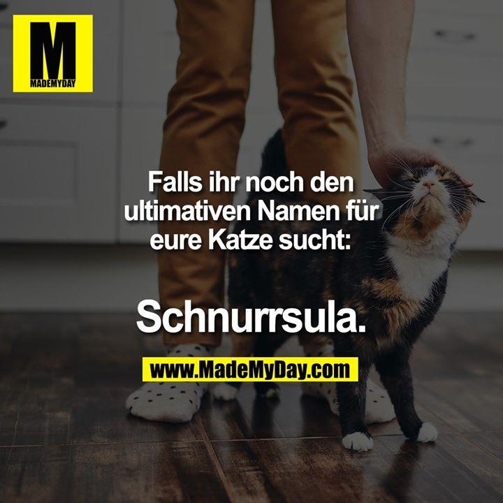 Falls ihr noch den ultimativen Namen für eure Katze sucht:<br /> Schnurrsula.