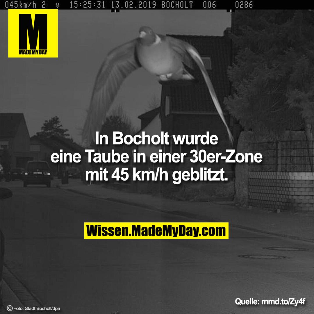 In Bocholt wurde eine Taube in einer 30er-Zone mit 45 km/h geblitzt.