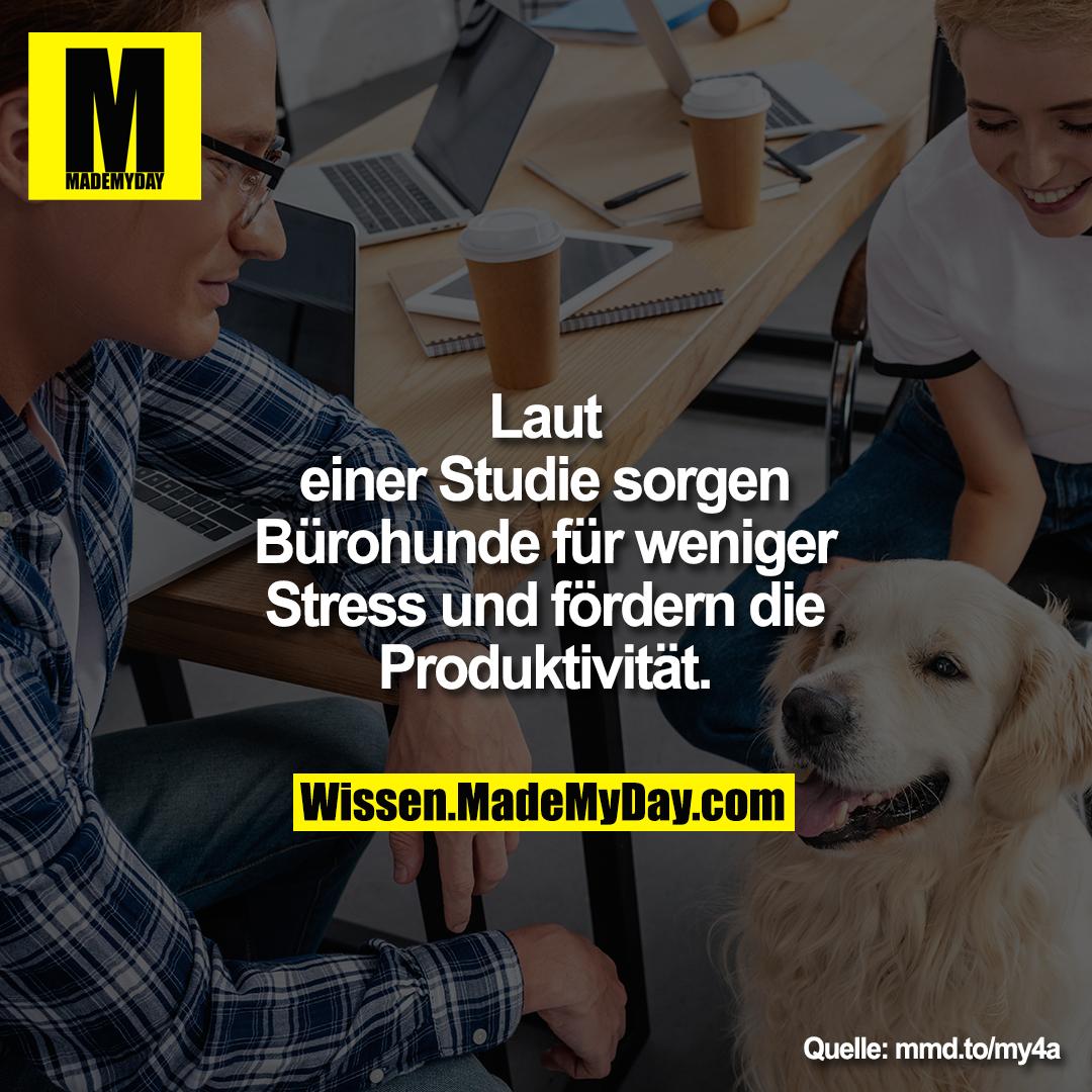 Laut einer Studie sorgen Bürohunde für weniger Stress und fördern die Produktivität.