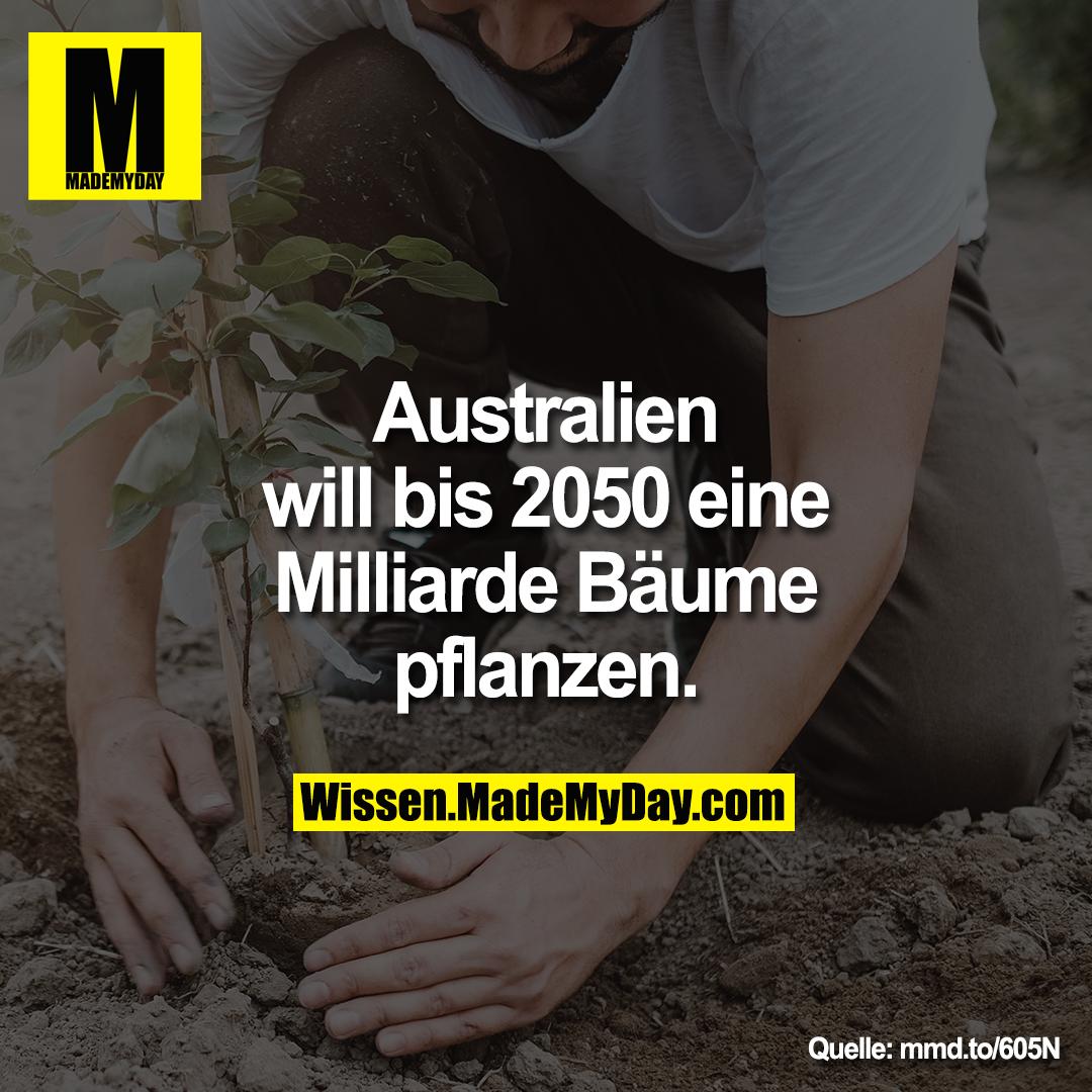 Australien will bis 2050 eine Milliarde Bäume pflanzen.