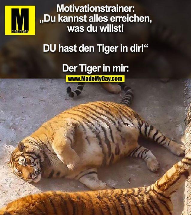"""Motivationstrainer: """"Du kannst alles erreichen, was du willst! DU hast den Tiger in dir!""""<br /> <br /> Der Tiger in mir:"""