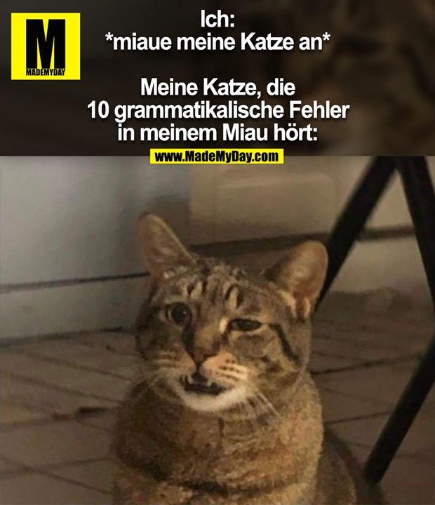 Ich: *miaue meine Katze an*<br /> Meine Katze, die 10 grammatikalische Fehler in meinem Miau hört: