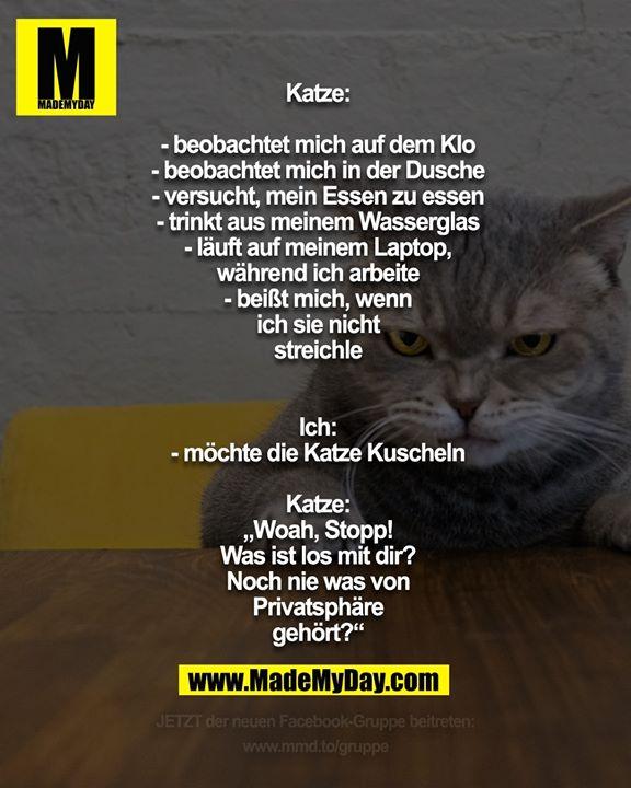 """Katze:<br /> - beobachtet mich auf dem Klo<br /> - beobachtet mich in der Dusche<br /> - versucht, mein Essen zu essen<br /> - trinkt aus meinem Wasserglas<br /> - läuft auf meinem Laptop, während ich arbeite<br /> - beißt mich, wenn ich sie nicht streichle<br /> <br /> Ich:<br /> - möchte die Katze Kuscheln<br /> Katze:<br /> """"Woah, Stopp! Was ist los mit dir? Noch nie was von Privatsphäre gehört?"""""""
