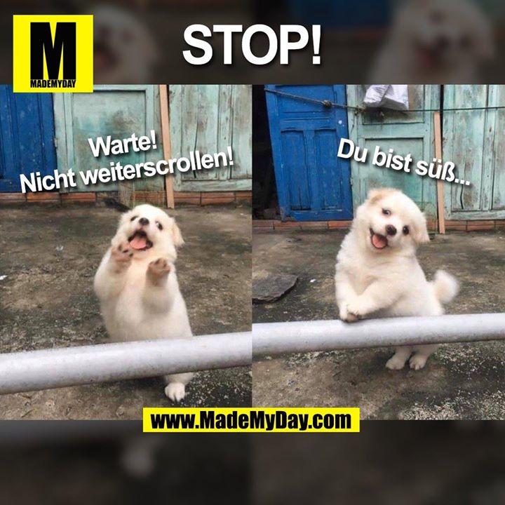 STOP!<br /> Warte!<br /> Nicht weiterscrollen!<br /> Du bist süß...