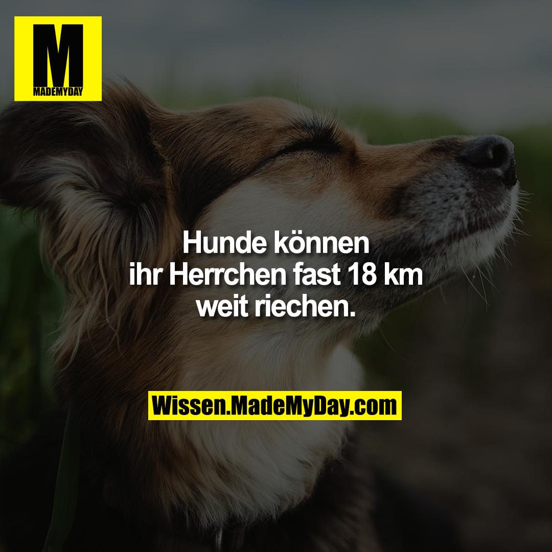 Hunde können ihr Herrchen fast 18 km weit riechen.