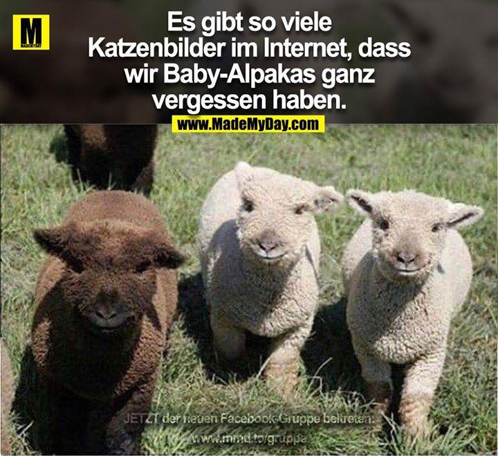 Es gibt so viele<br /> Katzenbilder im Internet, dass<br /> wir Baby-Alpakas ganz<br /> vergessen haben.
