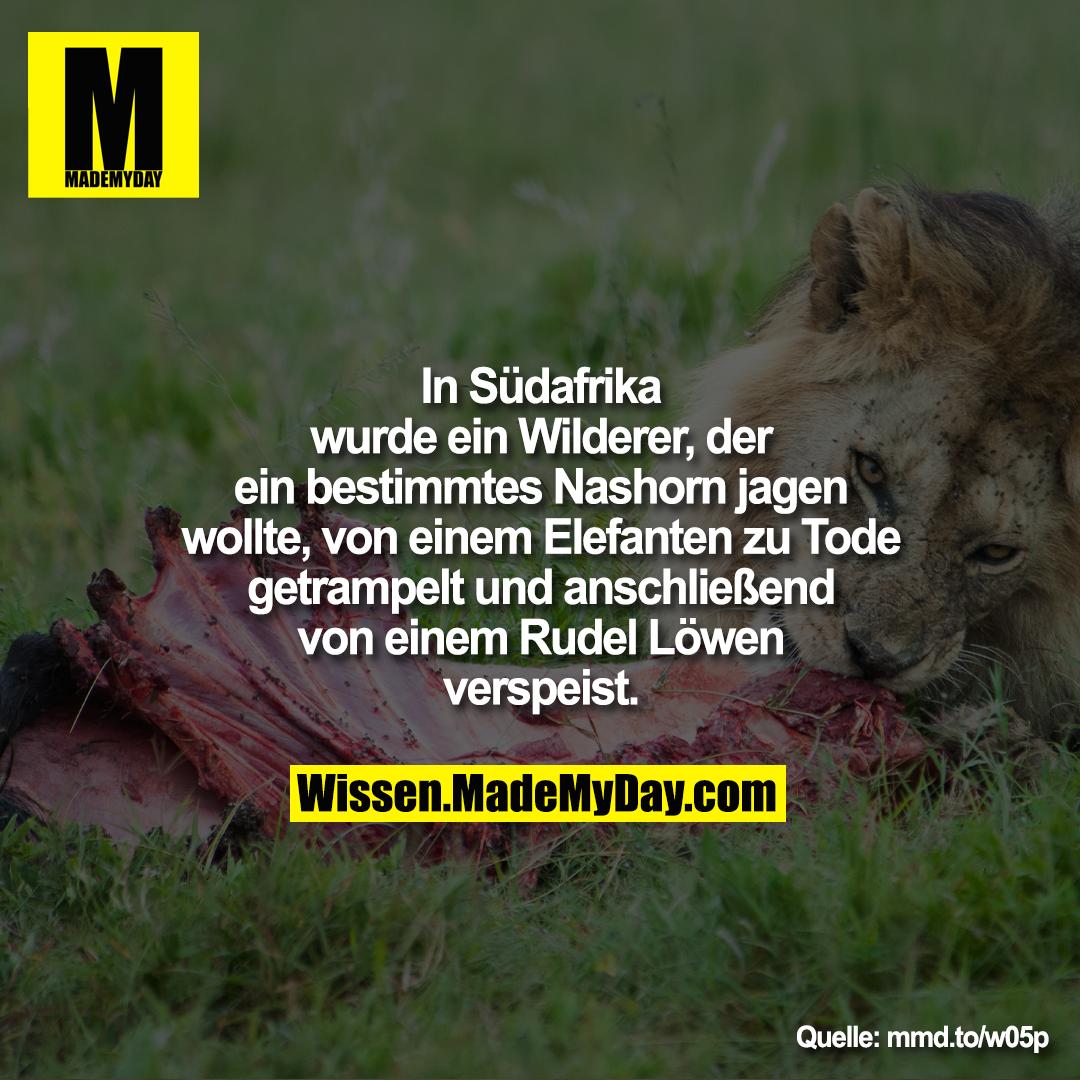 In Südafrika wurde ein Wilderer, der<br /> ein bestimmtes Nashorn jagen<br /> wollte von einem Elefanten zu Tode<br /> getrampelt und anschließend von<br /> einem Rudel Löwen verspeist.<br /> mmd.to/w05p