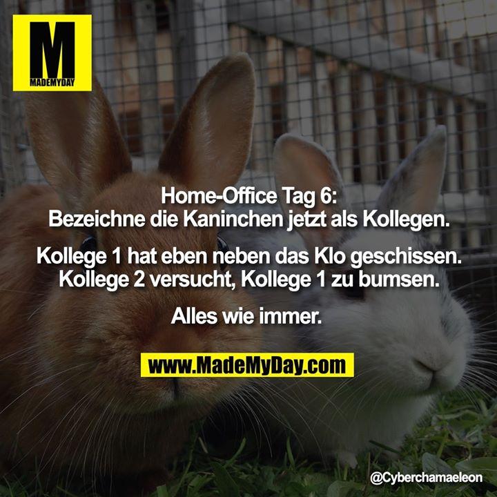 Home-Office Tag 6:<br /> Bezeichne die Kaninchen jetzt als Kollegen.<br /> <br /> Kollege 1 hat eben neben das Klo geschissen.<br /> Kollege 2 versucht, Kollege 1 zu bumsen.<br /> <br /> Alles wie immer.