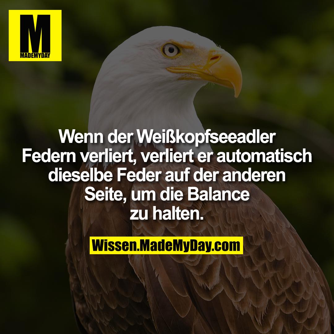 Wenn der Weißkopfseeadler Federn verliert, verliert er automatisch dieselbe Feder auf der anderen Seite, um die<br /> Balance zu halten.