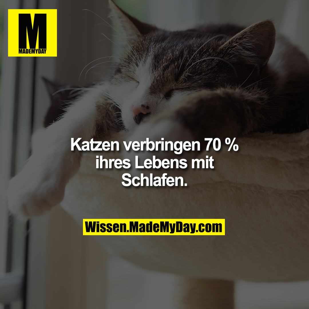 Katzen verbringen 70 % ihres Lebens mit Schlafen.