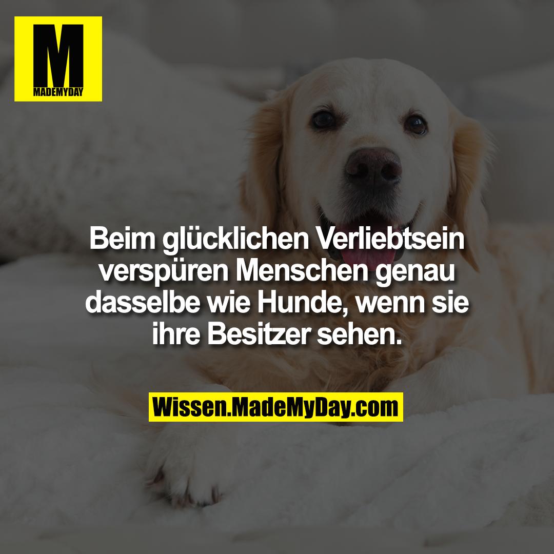 Beim glücklichen Verliebtsein verspüren Menschen genau dasselbe wie Hunde, wenn sie ihre Besitzer sehen.