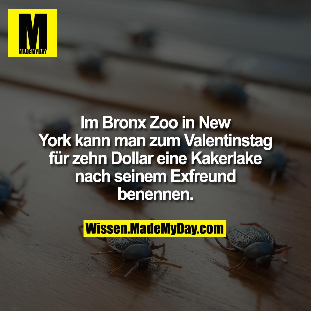 Im Bronx Zoo in New York kann man zum Valentinstag für zehn Dollar eine Kakerlake nach seinem Exfreund benennen.