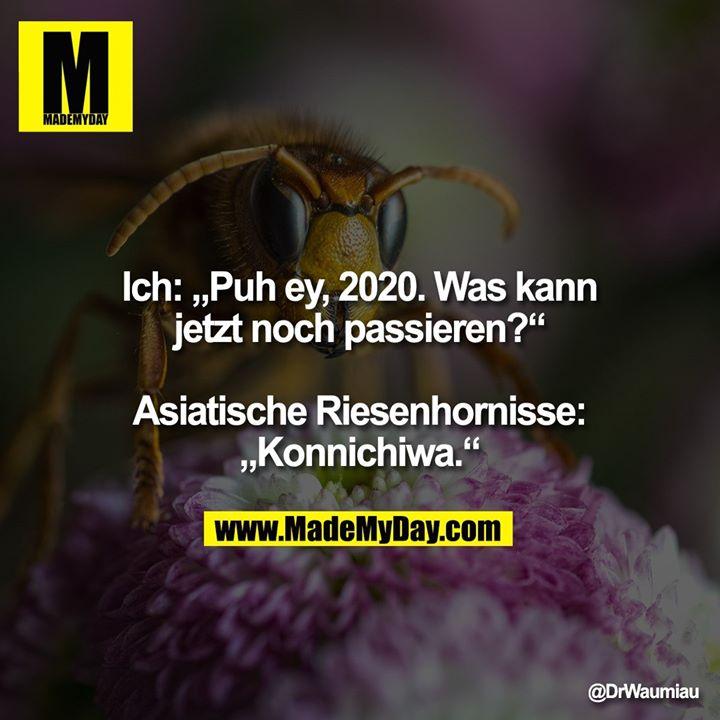 """Ich: """"Puh ey, 2020. Was kann<br /> jetzt noch passieren?""""<br /> <br /> Asiatische Riesenhornisse:<br /> """"Konnichiwa."""""""