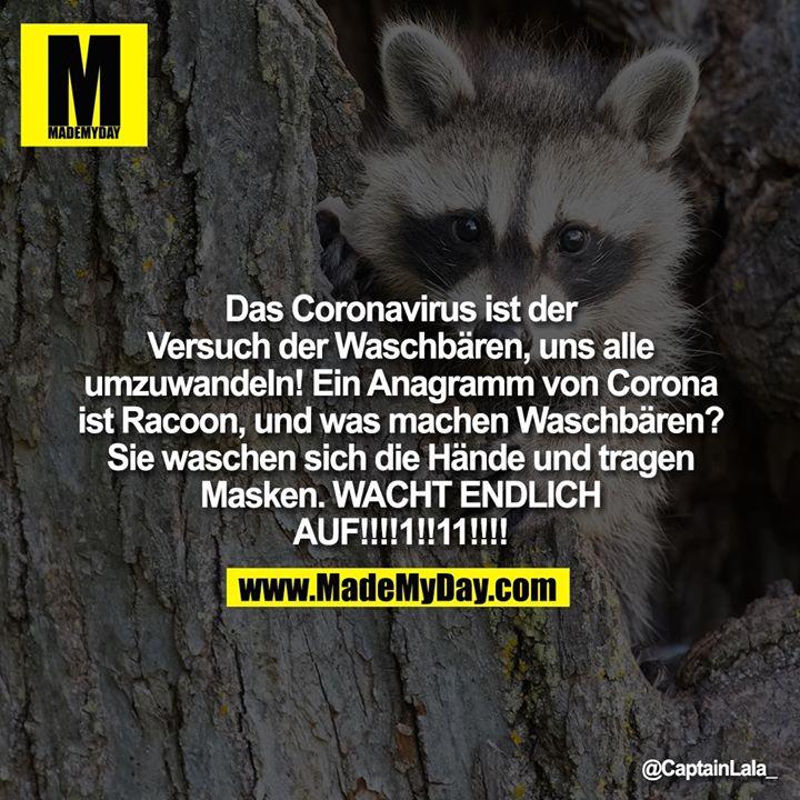 Das Coronavirus ist der Versuch der Waschbären, uns alle umzuwandeln! Ein Anagramm von Corona ist Racoon, und was machen Waschbären? Sie waschen sich die Hände und tragen Masken. WACHT ENDLICH AUF!!!!1!!11!!!!