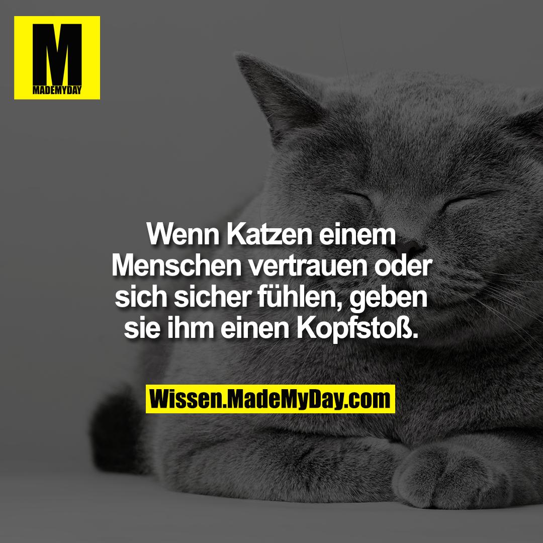 Wenn Katzen einem Menschen vertrauen oder sich sicher fühlen, geben sie ihm einen Kopfstoß.