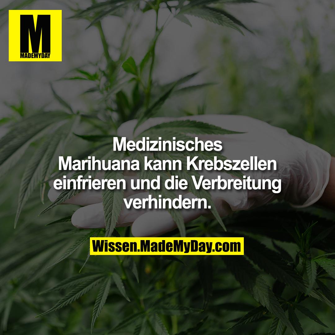 Medizinisches Marihuana kann Krebszellen einfrieren und die Verbreitung verhindern.