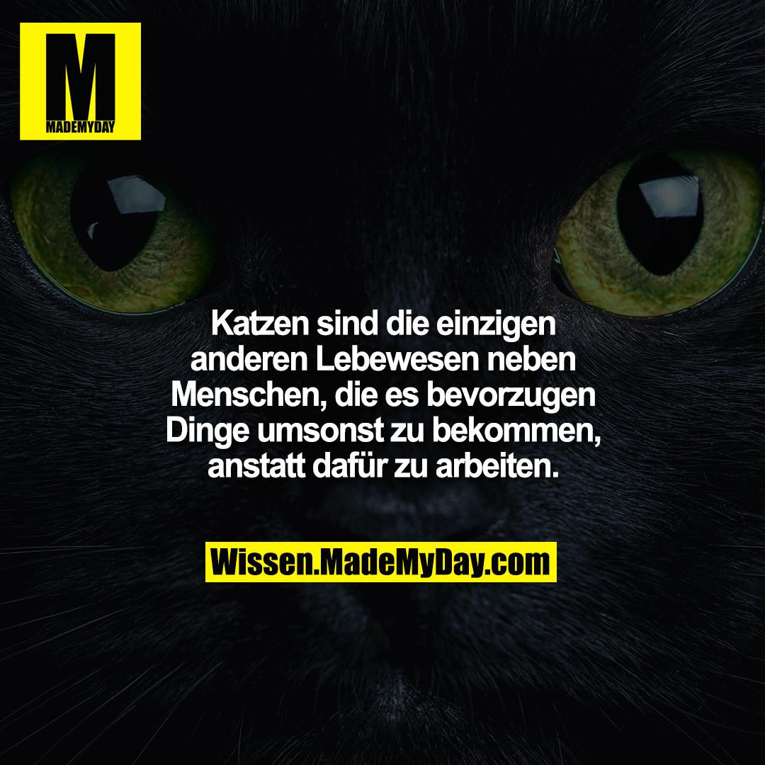Katzen sind die einzigen anderen Lebewesen neben Menschen, die es bevorzugen Dinge umsonst zu bekommen, anstatt dafür zu arbeiten.