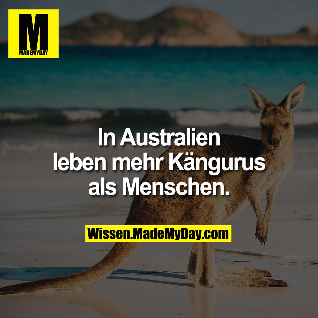 In Australien leben mehr Kängurus als Menschen.